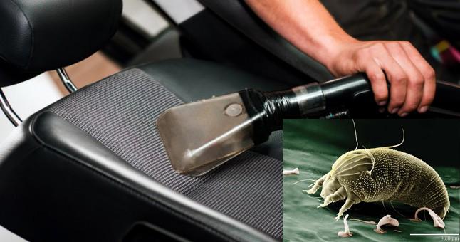 Aracınızdaki tehlikeli akarlar (mite böcekleri)